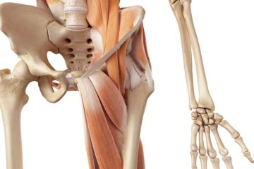 The HIP: from Anatomy & Kinesiology Foundations to Clinical Evaluation & Treatment Solutions