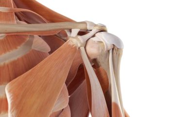 The SHOULDER: Anatomy and Kinesiology Foundations